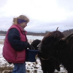 winter yak feeding small